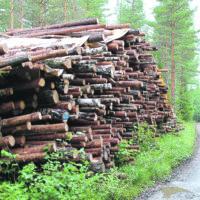 Siivikkalan uudella kaava-alueella aloitettiin metsänhakkuut