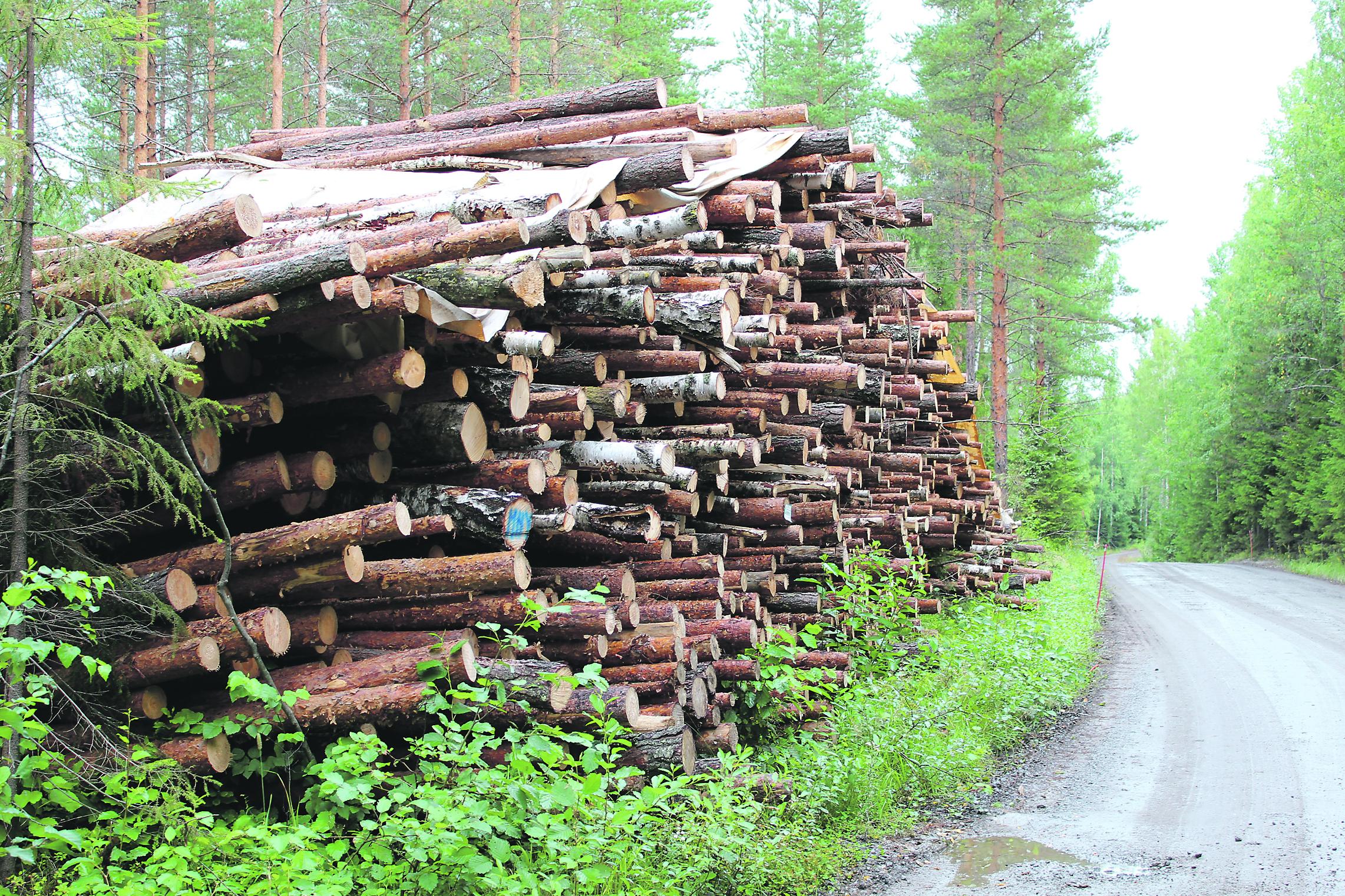 Metsän Arvo Hehtaari