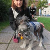 Koirat komeina catwalkilla