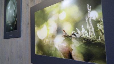 vuoden luontokuvat, Seitsemisen luontokeskus, luonto, valokuva, valokuvaus