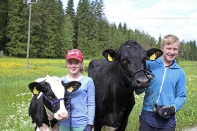 Junior Handler, maatalousnäyttelyt, Okra, maatalous