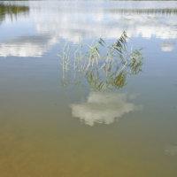 ELY-keskus tukee kahta vesienhoitohanketta Ylöjärvellä