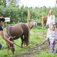 Voltilla opitaan hevosmiestaitoja korvista kavioihin