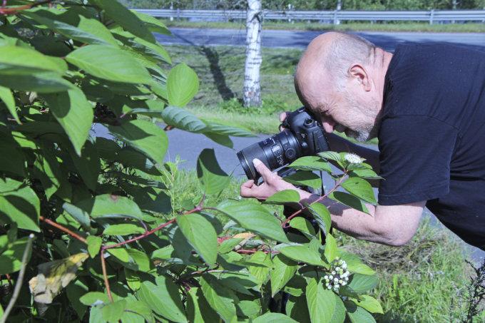 Pihapiirin pienimmät -näyttely, Tuomo Virtanen, valokuvaus, hyöteiset, luonto