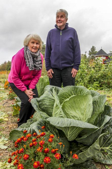 jättikasvikset, jättikasvisten SM, Pirjo Mutanen, puutarhanhoito, kaali, Markku Mutanen