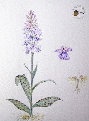 Laura Uimonen, luonto, taide, luontokartoitus