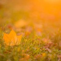 Timo Jokinen: Ihmisellä on taipumus kaivata nykyhetkestä aina johonkin – syksyllä asia korostuu