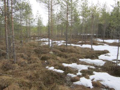 luonnonsuojelualueet, Leposuo (kuva: Pentti Keskitalo)