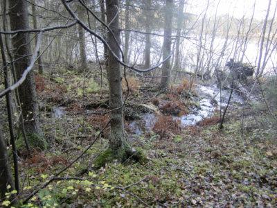 luonnonsuojelualueet, Mastosvuori, Mastosjärvi, (Kuva: Pentti Keskitalo)