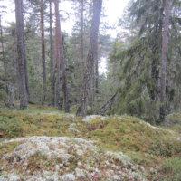 Ylöjärvelle kaksi uutta luonnonsuojelualuetta
