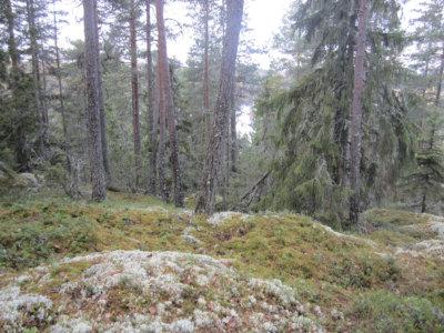 luonnonsuojelualueet, Mastosvuori, (kuva: Pentti Keskitalo)