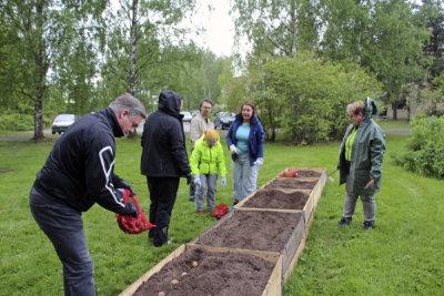 perunanistutus, Rauno Kesseli, peruna, kirkkopuisto, kuva: Iiria Lehtinen