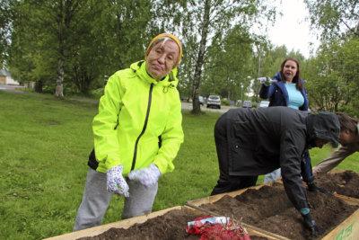 perunanistutus, Tuija Haavisto, peruna, kirkkopuisto, kuva: Iiria Lehtinen