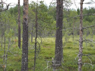 Eeva Kota-aho, Riuttaskylä, luonnonsuojelualue, luontolahjani Suomelle, kuva: Eeva Kota-aho