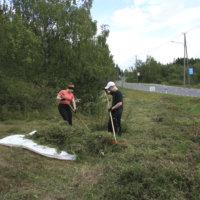 Keijärven niittotalkoot auttavat ketokukkia
