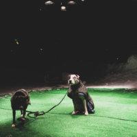 Alexander Salvesenin Intiaanikesä sijaitse Räikänpuistossa. Se on immersiivinen teos, eli yleisö saa vapaasti astua sen sisään. Lamput lämmittävät alustaa mukavasti paukkupakkasessa.