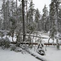 Pirkan Hiihdon uraa ahkeroidaan kuntoon Aapeli-myrskyn jäljiltä
