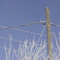 Helpotusta sähkökatkoihin: Kuru saa kesällä akun, joka turvaa noin sadalle taloudelle sähköt