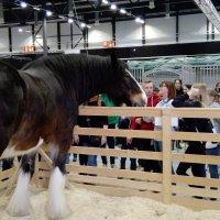 Jättimäinen Voitto ihastutti ja vieraat viihtyivät hevosmessuilla