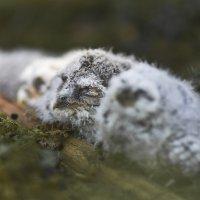 Rengastetut poikaset saattavat löytyä myöhemmin muualta pesimästä, mikä saadaan tietää rengastuksen avulla.