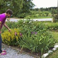 Kukkapenkissä kasvaa myös kurjenmiekkaa.