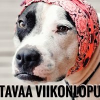 Ylöjärven Uutisten ensimmäinen viikonlopun lukupaketti on täällä!