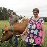 Antti ja Heli Teiskonlahti poseeraavat Ekstaasin, tilan vanhimman lypsylehmän kanssa. Ekstaasi on vuosikymmenen mittaisen uransa aikana lypsänyt hurjat 80 000 kiloa maitoa.