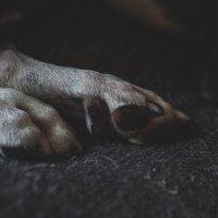 Nappe-koira kuoli maanantaina ylöjärveläisellä leirintäalueella toisten koirien hampaissa – koirien omistajilla eri versiot tapahtumista