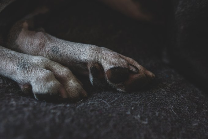 Koira Kuoli Nukutukseen