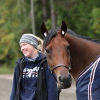 Teivo: Kriterium-karsintojen lähtölistat julkaistiin – samassa lähdössä Ilveksen ja Tapparan hevoset