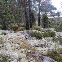 Ylöjärvi sai viimein kaksi uutta luonnonsuojelualuetta – Hanke viivästyi 1,5 vuotta, kun ylöjärveläismies teki toisesta luonnonsuojelualueesta valituksen oikeuteen
