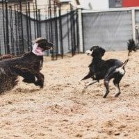 Tarvitseeko koirasi päivähoitopaikan tai hemmottelevan tassuhoidon? – Ylöjärvi saa ensimmäisen lemmikkihotellinsa