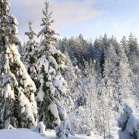 Vieraannumme talvesta – Joskus on ollut valkoista kultaa, jossa pystyi leikkimään likaantumatta