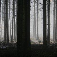 Tummiin pukeutunut nuorukainen ahdisteli 16-vuotiasta tyttöä Haavistolla: läimäytti ensin takapuolelle ja lähti jahtaamaan huivi kasvoillaan – Myös toinen nuori nainen kokenut vastaavaa