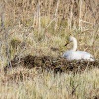 Nyt on lintujen pesimärauha – Toimi vastuullisesti liikkuessasi lintuvesillä ja metsässä ja pidä koirat kiinni