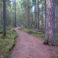 Vinkit vappuretkelle Seitsemisen ja Helvetinjärven kansallispuistoihin – muista kokkauspaikat, kävelysuunnat ja telttailualueet