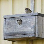 Linnunpöntöllä voi auttaa kolopesijöitä ja tuoda uutta eloa pihapiiriin – pesimäpaikoista on Suomessa pulaa