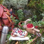 Marjoista 90 prosenttia jää metsään – Marjat poimitaan tänä vuonna suomalaisten voimin