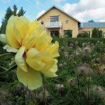 Kesäkuvakisan viikon kuva: Kukkaloistoa Pinsiön taimistolla