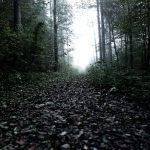 Vielä riittää metsiä marjastajille ja villisioille – Ei rikota mitään, ei häiritä ketään