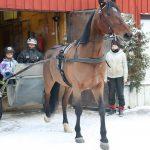 """Lasten ja nuorten sairaala sai Teivossa hienon avustuspotin hevosavusteiseen kuntoutukseen – """"Tällaiselle toiminnalle on koko ajan valtava tarve"""""""