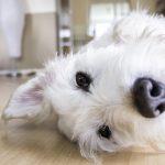 Unelmakodin edellisiin asukkeihin kuuluikin koira tai kissa – kaataako se allergiaperheen asuntosuunnitelmat?