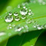 Tulevaisuustekniikkaa: Ylöjärvestä tulevaisuuden bioenergian edelläkävijä