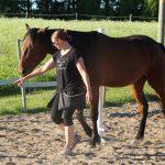 Hevosiakin voi kouluttaa nameilla – Ulla Uosukainen opettaa näinhevosiamenemään kuljetusautoon ja jopa erottelemaan värejä