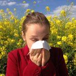 Siitepölykausi on alkanut – lue vinkit oireiden helpottamiseen