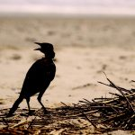 Selvitys: Pirkanmaalla esiintyy yli 320 valtakunnallisesti uhanalaista lajia – Kymmenkunta lajia elää ainoastaan Pirkanmaalla