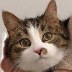 Veko-kissa löytyi yllättäen vuoden seikkailun jälkeen – lue Vekon selviytymistarina