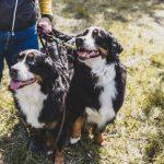 """Siivikkalaan on suunnitteilla hehtaarin kokoinen yksityinen koirapuisto: """"Ei tarvitse pelätä, että joku tuntematon ilmestyy paikalle samaan aikaan"""""""