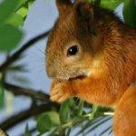 Lukijan kuva: Söpö orava paistatteli päivää Soppeenmäessä