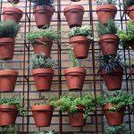 Näin saat kasvit ja yrtit kukoistamaan kaupunkioloissa: lasitetulla parvekkeella viihtyvät paprika ja tomaatti, persilja ja tilli sopivat viileämpään